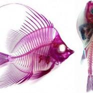 "29: ""Radioactive Fish Superhuman Vision"""