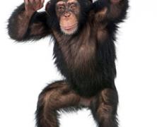 No Pants Monkey Party