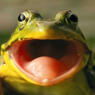 Chemical Weapon Frog Mouth