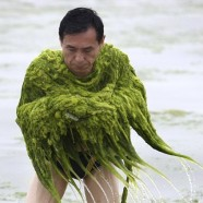 Shiny Algae People
