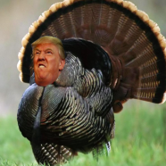 A Very Trump Thanksgiving